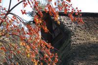百年公園 紅葉