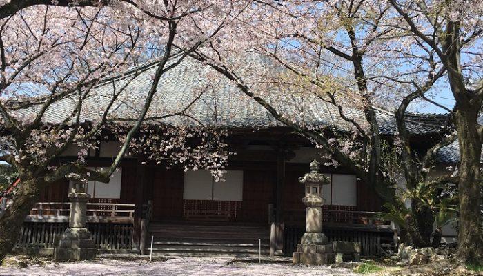 桜の隠れた名所